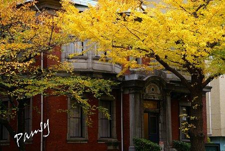 銀杏 yellow の街角・・5