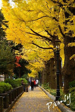 銀杏 yellow の街角・・6
