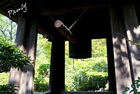 鐘楼から見える竹林・・