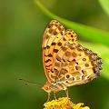 写真: 蝶・・・。