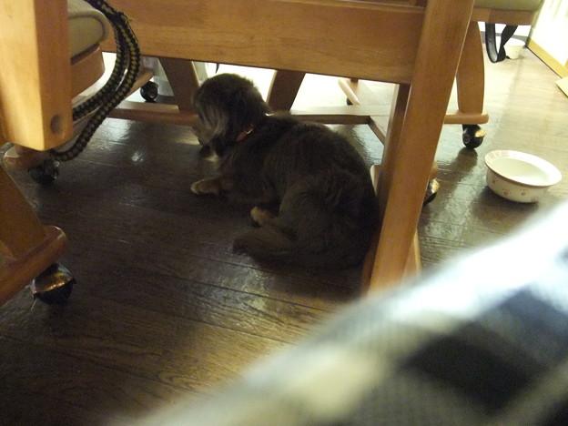 Photos: テーブルの下
