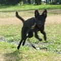 Photos: 飛んだり走ったり
