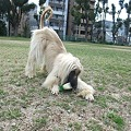 Photos: 大根と戯れるリア