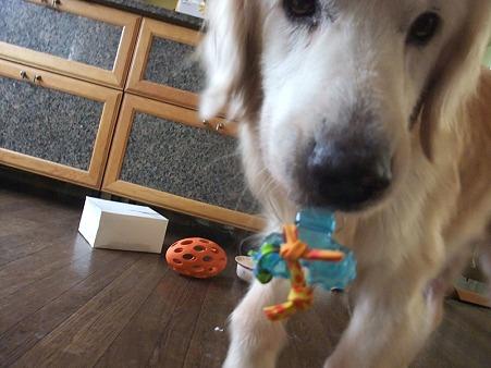 小型犬のおもちゃゲット!