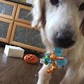 Photos: 小型犬のおもちゃゲット!