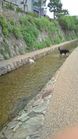2011.7.18川遊び2