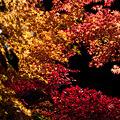 Photos: 平野屋の紅葉