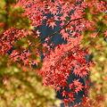 Photos: 松戸市・21世紀の森と広場