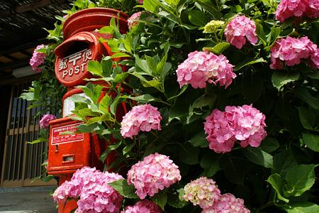 初夏、赤いポストとピンクの紫陽花!(100619)