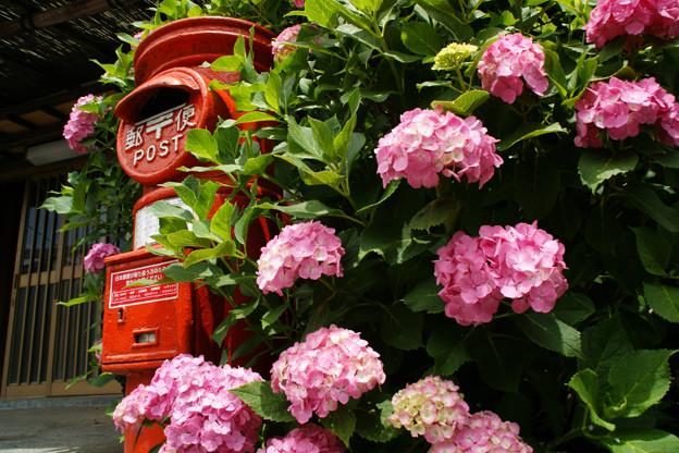 Photos: 初夏、赤いポストとピンクの紫陽花!(100619)