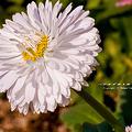 Photos: 野の花