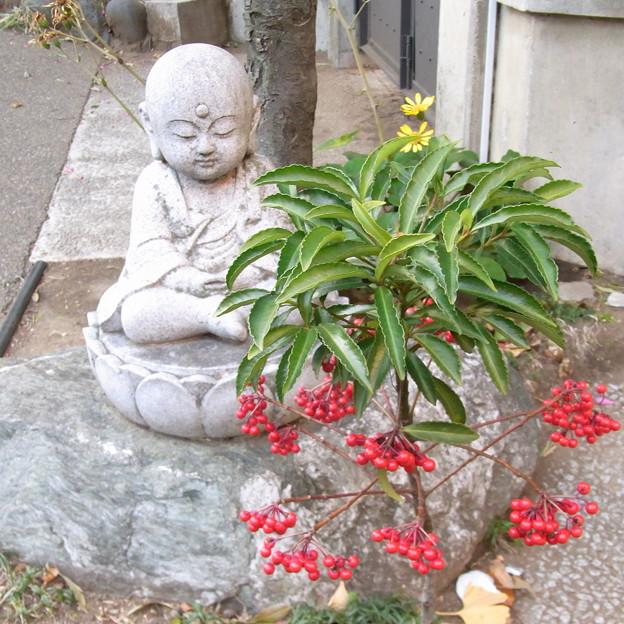 【東京|神社仏閣】 大円寺 (36)