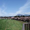 桜と風車と赤城山
