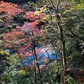 Photos: 101119-106紅葉と多摩川