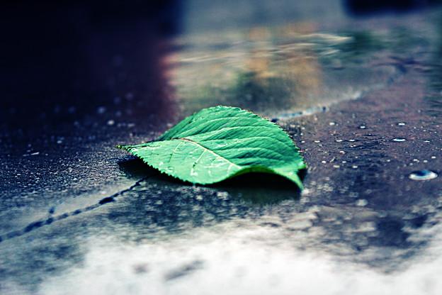 写真: 湿った落ち葉