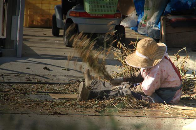 Photos: 豆を打つ老婆