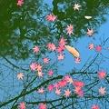 はらはらと秋が散る~西国寺の御池にて~