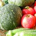涼しそうな朝の野菜たち