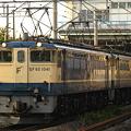 写真: pf1041-20081106a