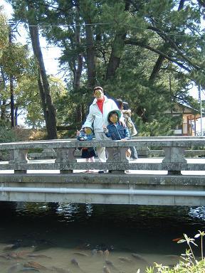 小田原城 鯉がいっぱい