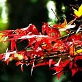 Photos: 街角の秋