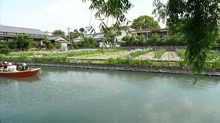柳川~椛島菖蒲園(3)