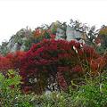 写真: 一目八景~見晴らし台への登山道(4)