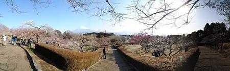 iwamotoyama_sizuoka_p1