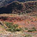 IMG_8847那須 茶臼岳 姥ヶ平の紅葉2