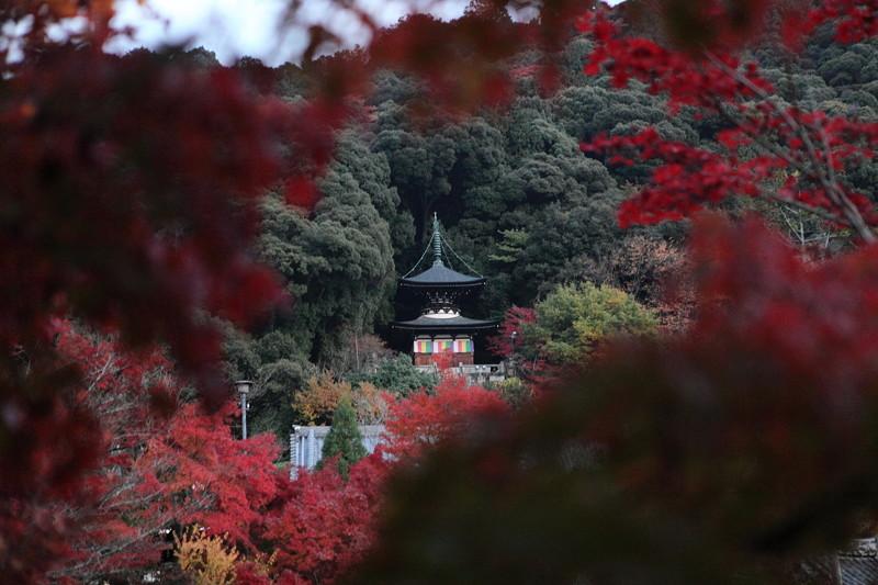 IMG_0085京都の紅葉_2010年11月