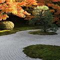 写真: IMG_9909京都の紅葉_2010年11月