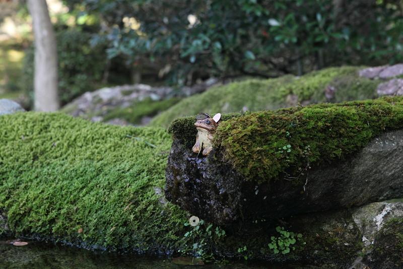 IMG_9961京都の紅葉_2010年11月