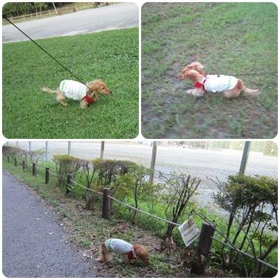 20110915 お散歩