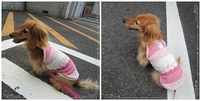 20110919 パパしゃん待ち〜♪