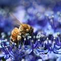 ミツバチくん、至福の時