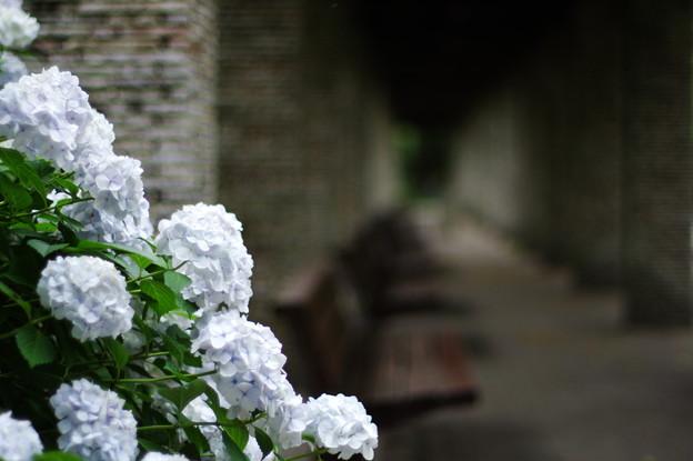Photos: Rainy Garden