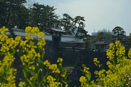 菜の花の北桔橋門