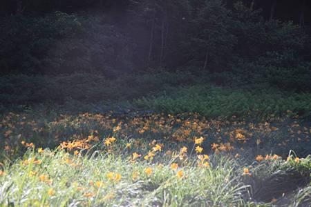 志賀高原ツーリング_20100719-071515北ドブ湿原