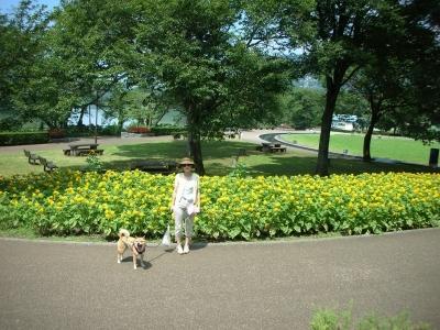 津久井の公園
