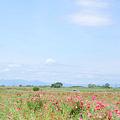 <花景色*ポピー畑の空>