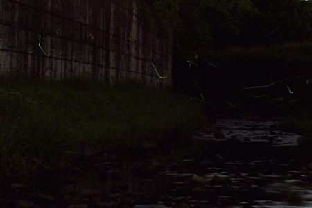 宝来橋のホタル 03(再加工)