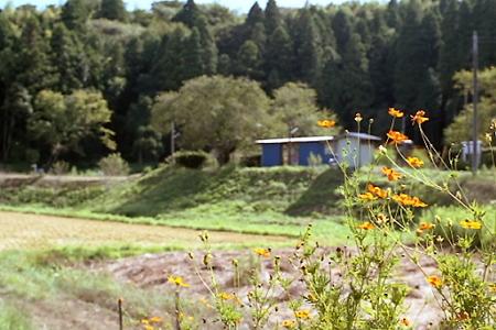 秋の小湊鉄道2010 11
