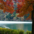 写真: 静かな湖畔の森のかげから・・
