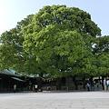 Photos: ご夫婦樹木
